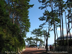 Dongbaek Island Walkway